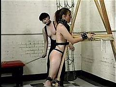 Bound girl is flogged painfully tubes
