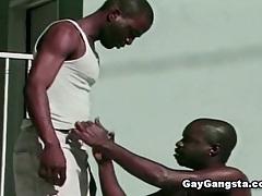 Black gays sucking dick tubes